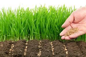 دانلود تحقیق روش های ازدیاد گیاهان